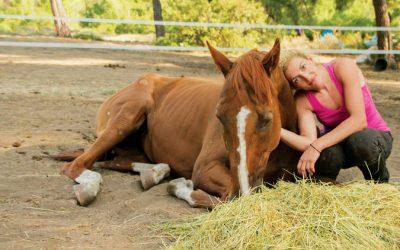 Νάνσυ Κουρέλλου: Προστάτιδα εγκαταλελειμμένων αλόγων