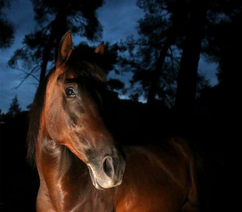Σώζοντας Γερασμένα Άλογα: Το 2012 μια γυναίκα έσωσε 12 εγκαταλελειμμένα άλογα. Και μαζί τους, σώθηκε και αυτή